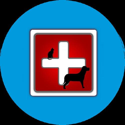 Рефераты скачать бесплатно без регистрации и смс Ветеринария